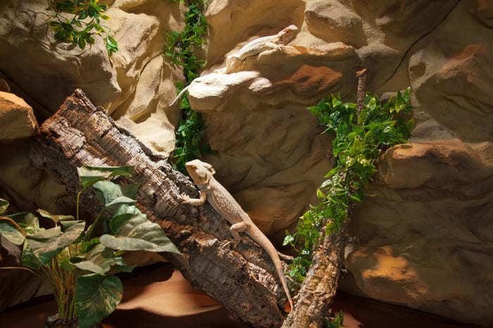 terrarium rückwand bartagame